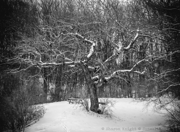 the-crooked-tree-23